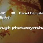 Photosynthesis_VideoImage