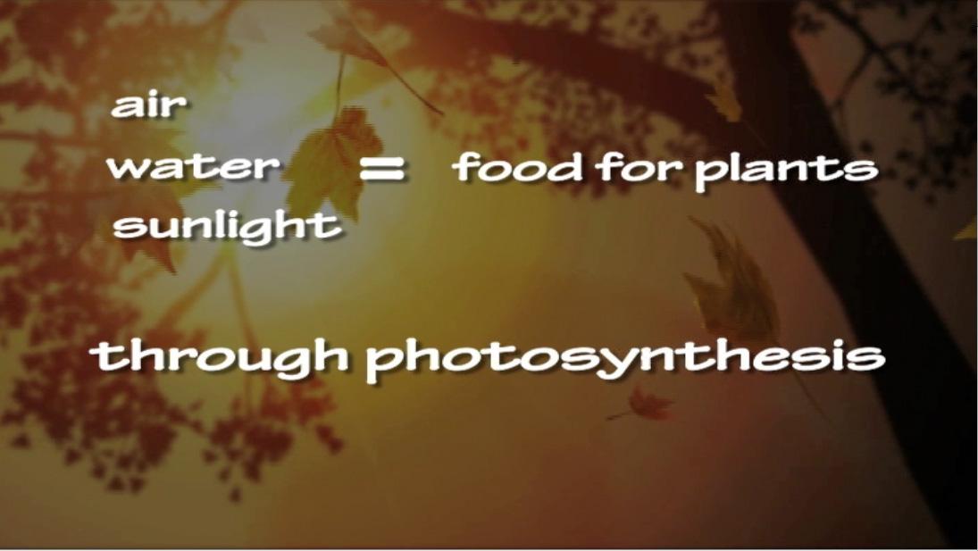 photosynthesis rap lyrics